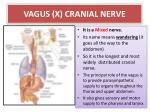 vagus x cranial nerve