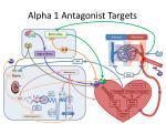 alpha 1 antagonist targets