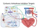 carbonic anhydrase inhibitor targets