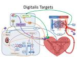 digitalis targets
