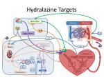 hydralazine targets