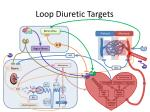 loop diuretic targets