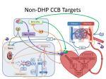 non dhp ccb targets