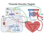 thiazide diuretic targets