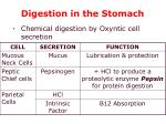 digestion in the stomach1