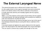 the external laryngeal nerve