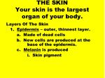 the skin your skin is the largest organ of your body