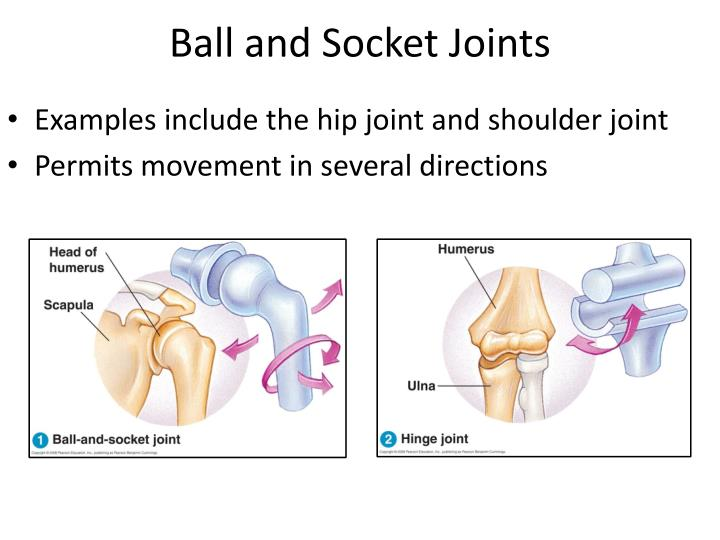 Ppt 112 Muscles And Movement Powerpoint Presentation Id2245497