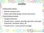 amina2