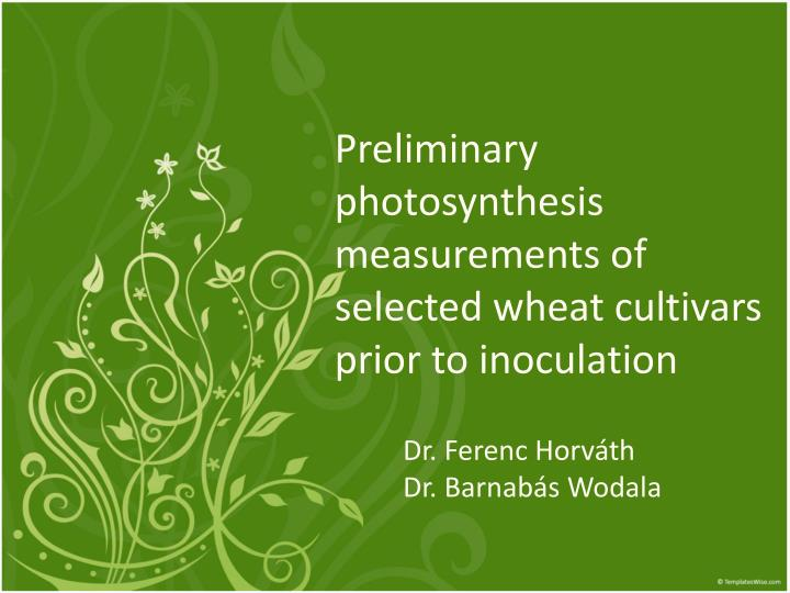 preliminary photosynthesis measurements of selected wheat cultivars prior to inoculation n.
