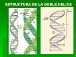 estructura de la doble helice1
