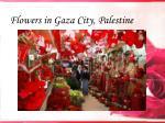 flowers in gaza city palestine