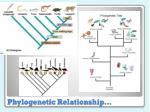 phylogenetic relationship