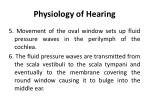 physiology of hearing1