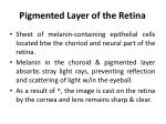 pigmented layer of the retina