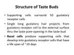structure of taste buds2