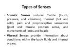 types of senses