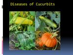 diseases of cucurbits