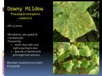 downy mildew pseudoperonospora cubensis