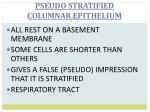 pseudo stratified columnar epithelium