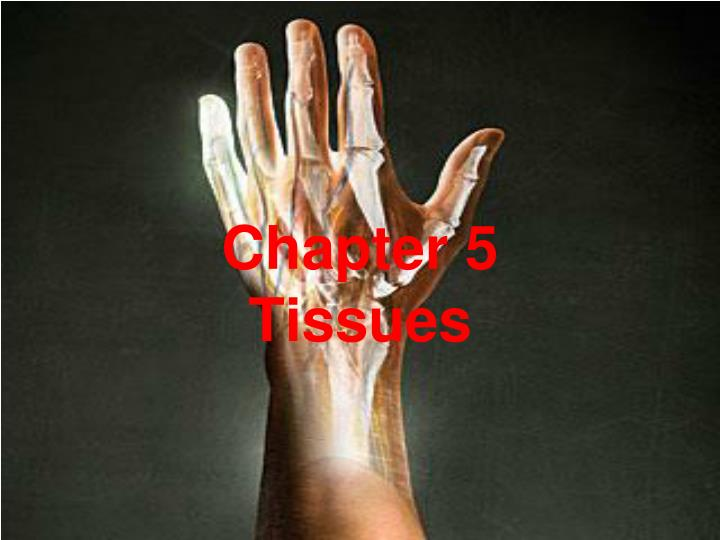 chapter 5 tissues n.