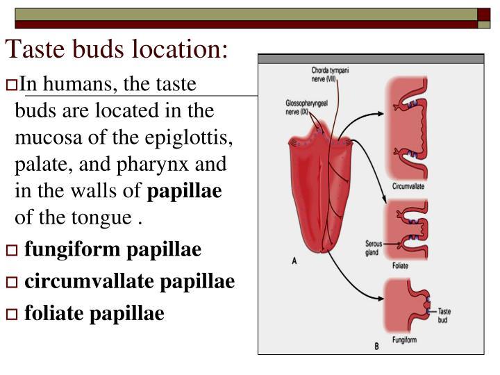 Ppt Taste Gustation Powerpoint Presentation Id2247017