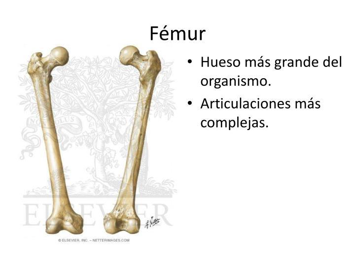 PPT - Osteolog ía y Articulaciones del miembro inferior PowerPoint ...