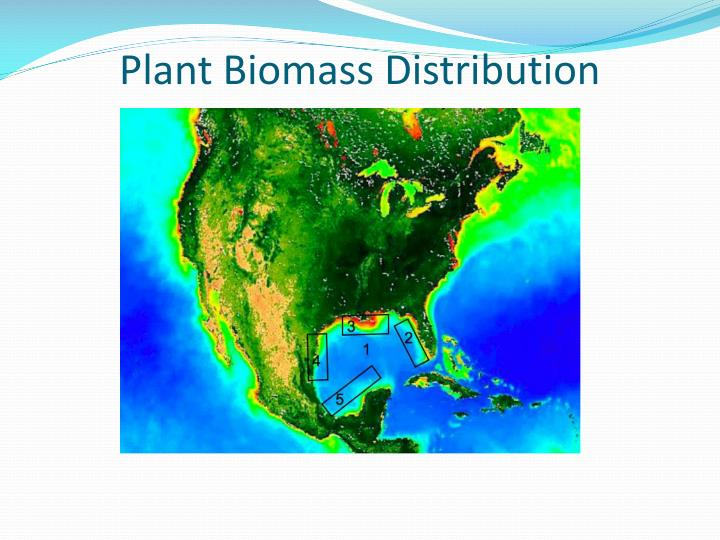 Plant biomass distribution