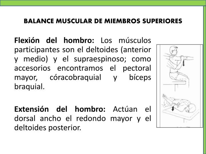 BALANCE MUSCULAR DE MIEMBROS SUPERIORES