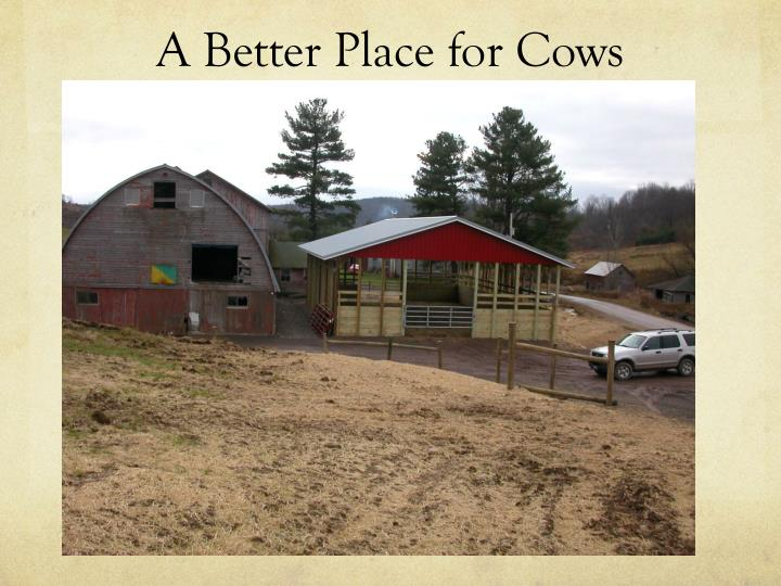 A Better Place for Cows