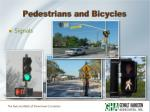 pedestrians and bicycles2