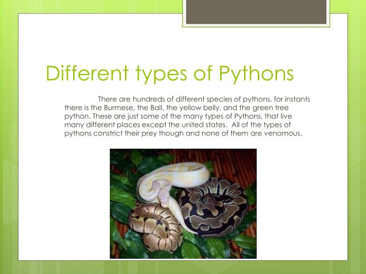 Different types of pythons