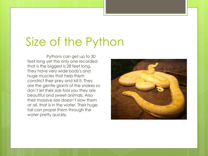 Size of the python