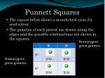 punnett squares1