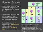 punnett square1