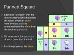 punnett square2