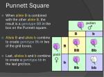 punnett square3