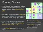 punnett square4