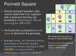 punnett square5