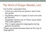 the work of gregor mendel cont11