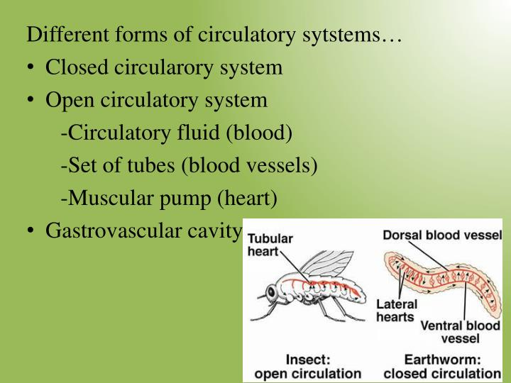 Different forms of circulatory