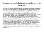 emergence of matched airway and vascular trees from fractal rules