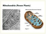 mitochondria power plants2