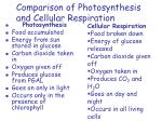 comparison of photosynthesis and cellular respiration