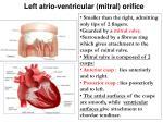 left atrio ventricular mitral orifice