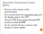 electron transport chain etc