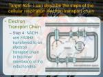 target 25 i can describe the steps of the cellular respiration electron transport chain