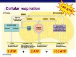 cellular respiration1