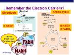 remember the electron carriers