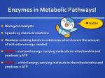enzymes in metabolic pathways